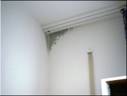 Penészes fal belső szigetelés